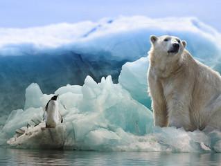 Ursos polares podem desaparecer até 2100 por causa da crise climática