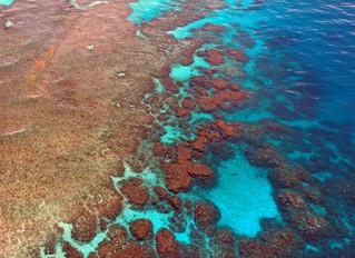 50% da Grande Barreira de Corais morreu nos últimos anos