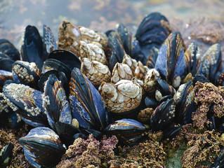 Não podemos deter a morte do oceano individualmente