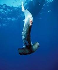 Primeira condenação por Shark Finning na Costa Rica