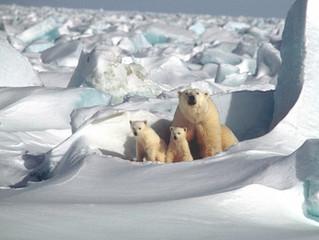 A ameaça da exploração de petróleo no Ártico