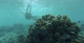 Maldivas registra o maior nível de poluição por microplásticos do planeta