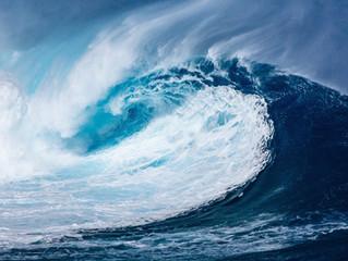 Fósseis marinhos indicam mudanças nos padrões do oceano no século XX