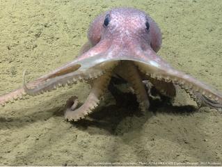 Menos uma área marinha protegida no mundo