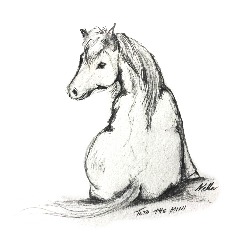 טוטו הסוס המיניאטורי