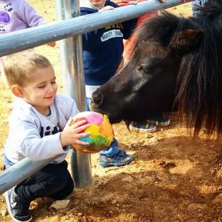 תקשורת מקרבת בין אדם לחיה חוג לילדים