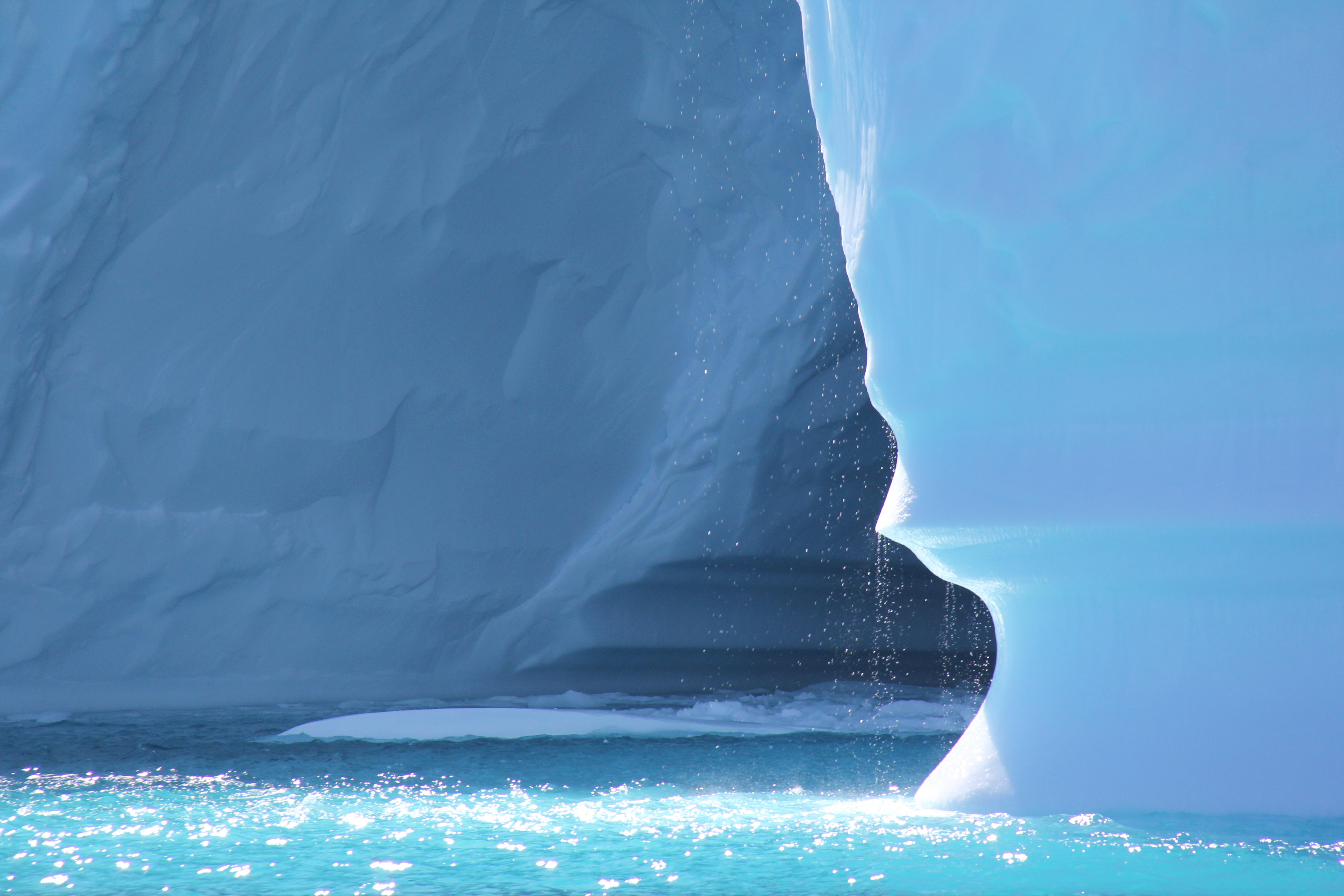 Arctic Tern, Greenland