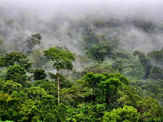 amazonrainforest1T.jpg