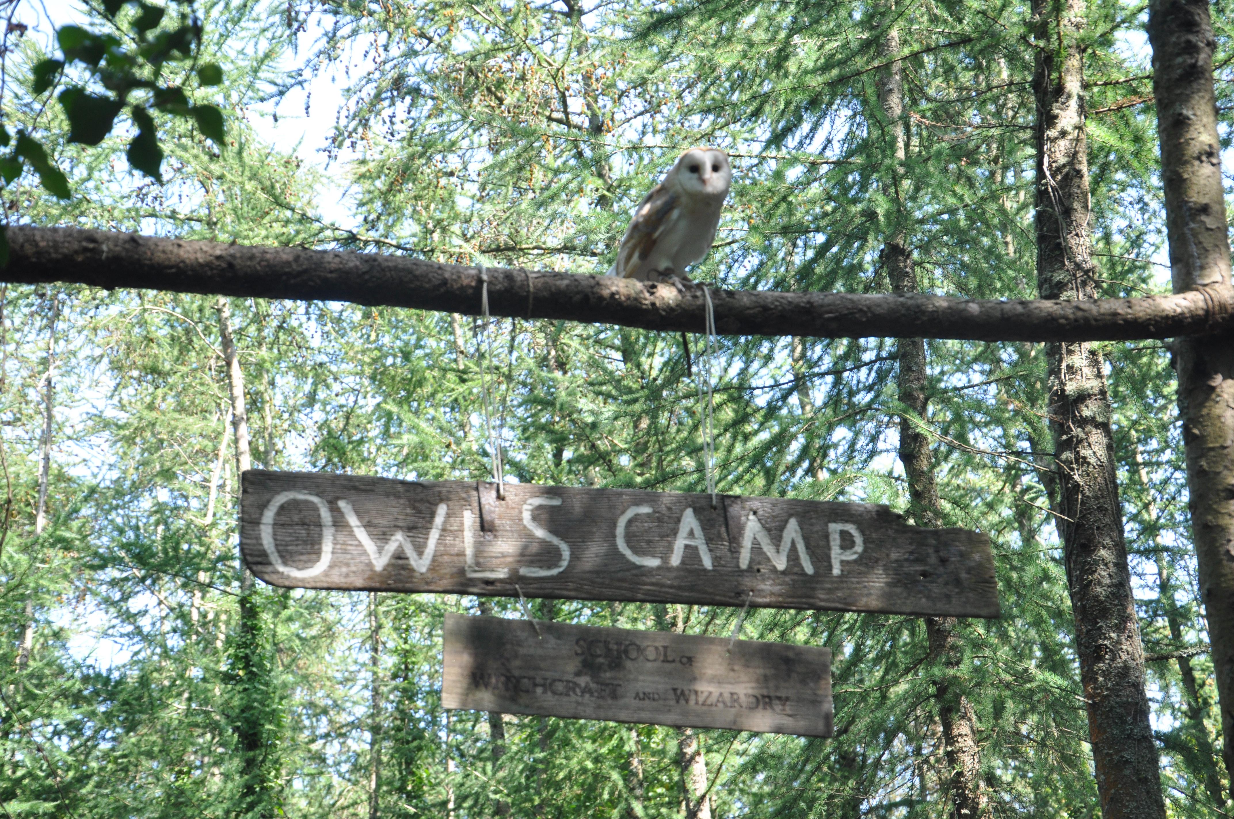 OWLS CAMP
