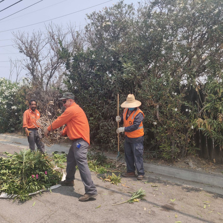 Unsightly Trees Trimmed & Removed Along La Cienega