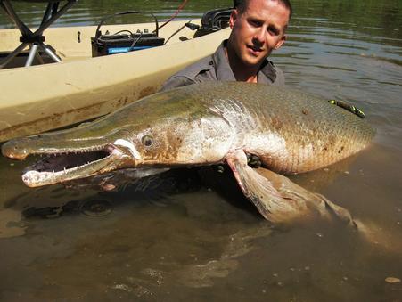 The Alligator Gar:  North America's Largest Freshwater Predatory Fish