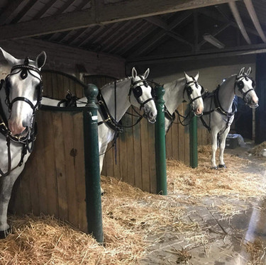 Horses Ready To Go
