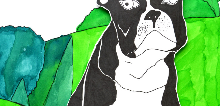Bulldog, 2019