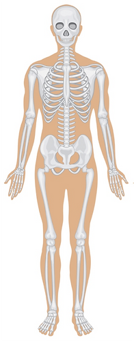free lesson plan and resources about the skeletal system and bones