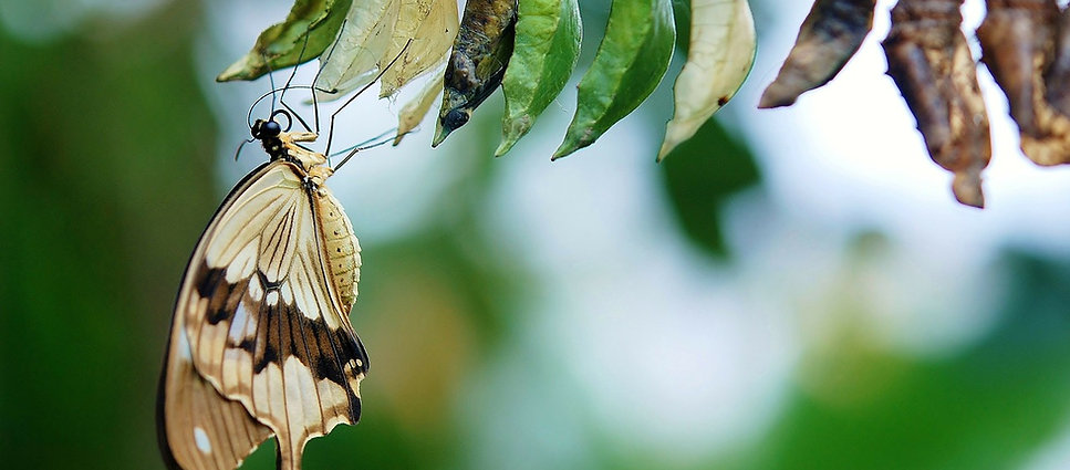 Free lesson plan and resources about the life cycle of a butterfly
