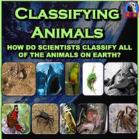 Classifying Animals PowerPoint & Activities