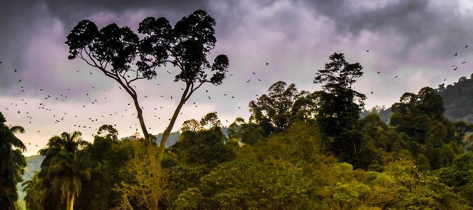 free lesson plan and resources about rainforests