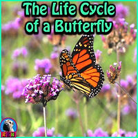 Free Life Cycle of a Butterfly PowerPoint