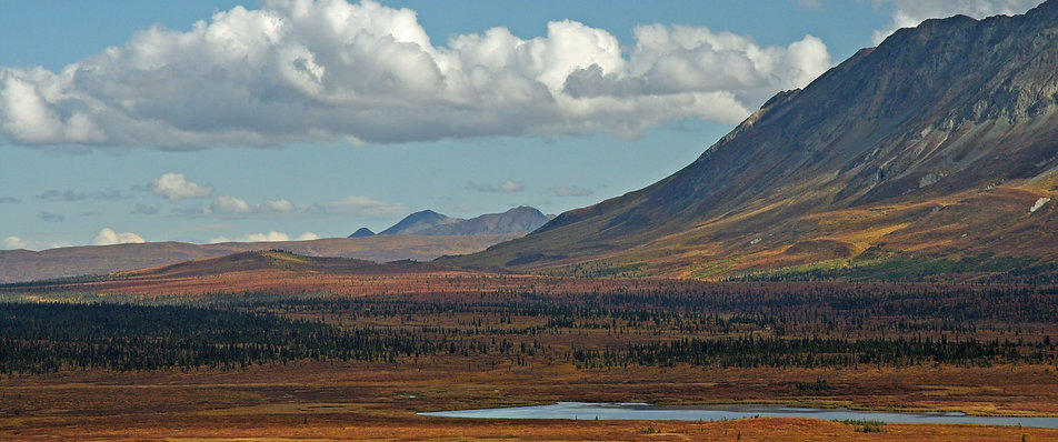 free lesson plan and resources about the tundra
