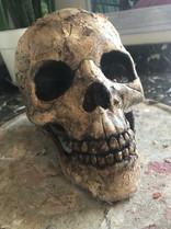 Fabricated pirate skull