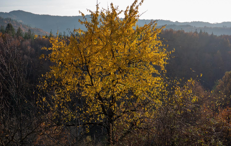 About_Tsarino_nature-22.jpg