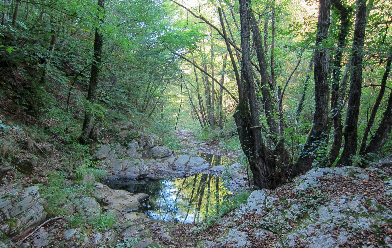 About_Tsarino_nature-39.jpg