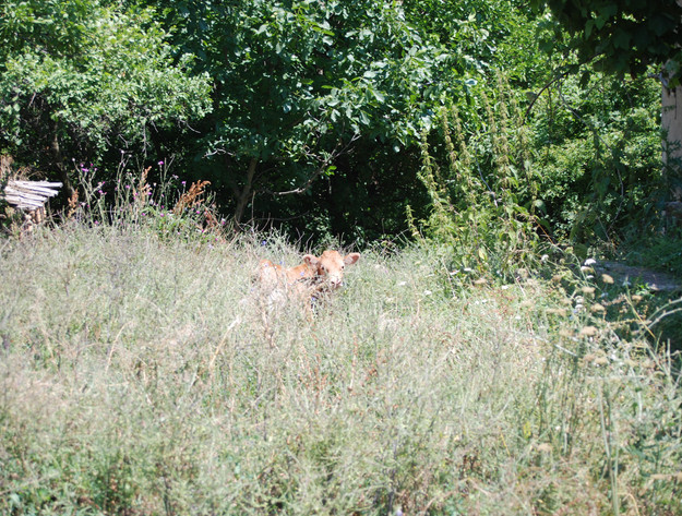 About_Tsarino_nature-47.jpg