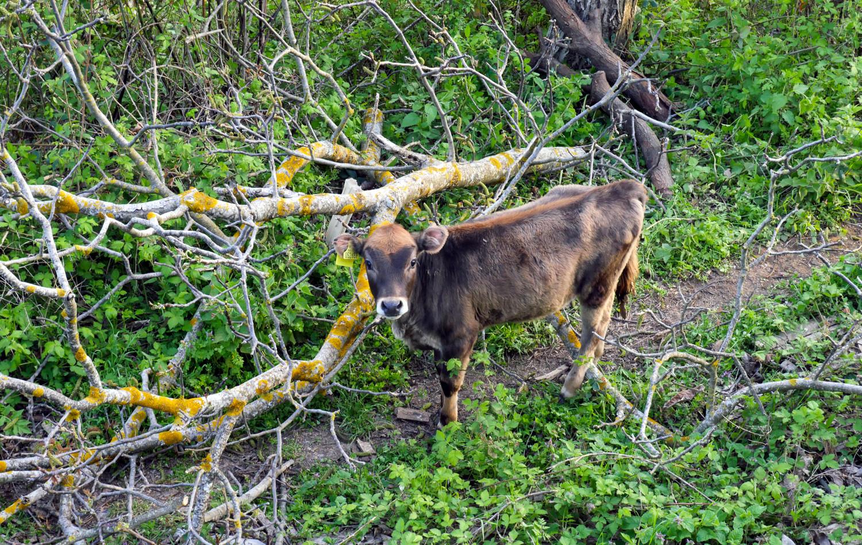 About_Tsarino_nature-36.jpg