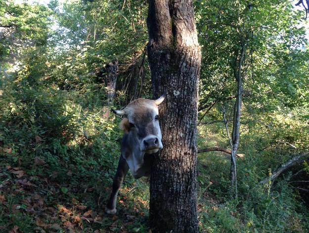 About_Tsarino_nature-28.jpg