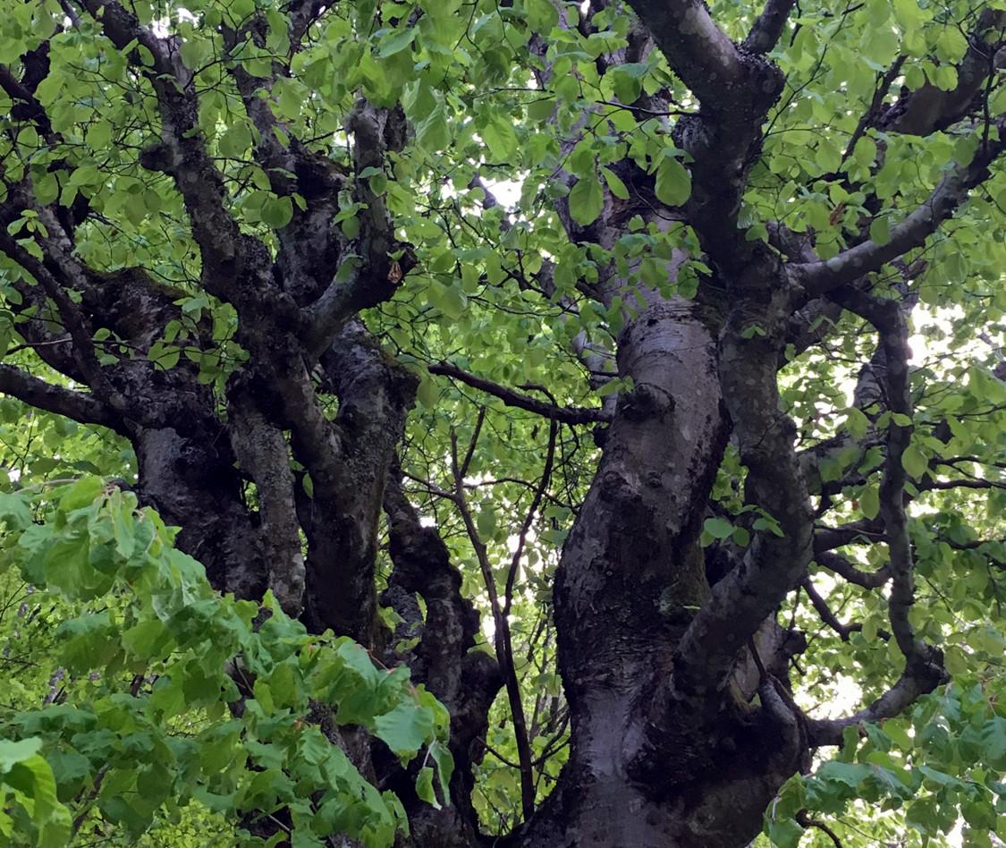 About_Tsarino_nature-06.jpg