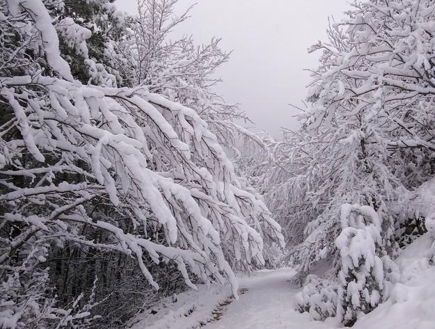 About_Tsarino_nature-50.jpg