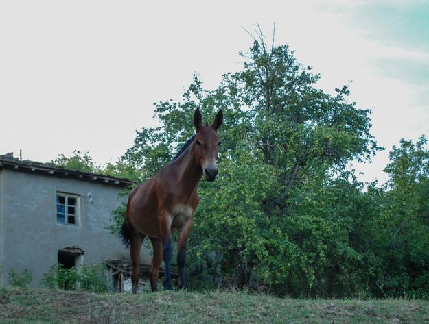 About_Tsarino_nature-48.jpg
