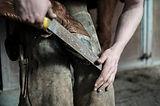 horseshoe_hoof_horse_hand_farrier-36971.
