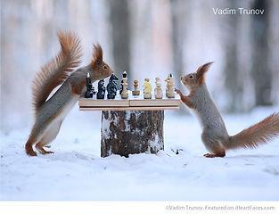squirell chess.jpg