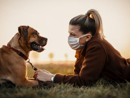 Исследование: собаки могут чувствовать коронавирус
