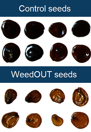 7 seeds - Blue Background - No Lines - N