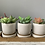 Thumbnail: Ceramic Succulent Planters | Set of 3