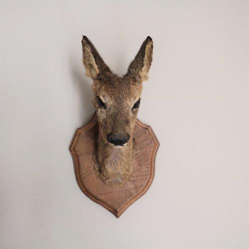 Pretty Vintage Taxidermy Deer Head Small