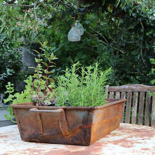 Metal Tray Planter
