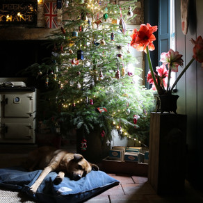 Comfort and Joy; Starre Corner at Christmas.