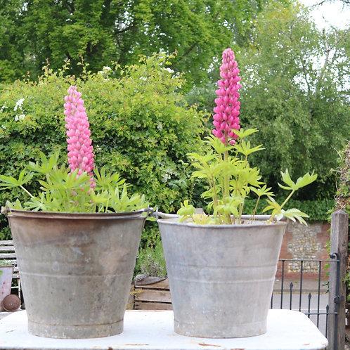 Galvanised zinc planters vintage buckets
