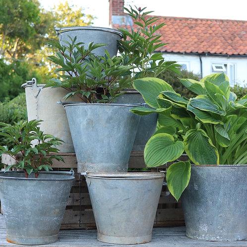 Galvanised Zinc Bucket Planters