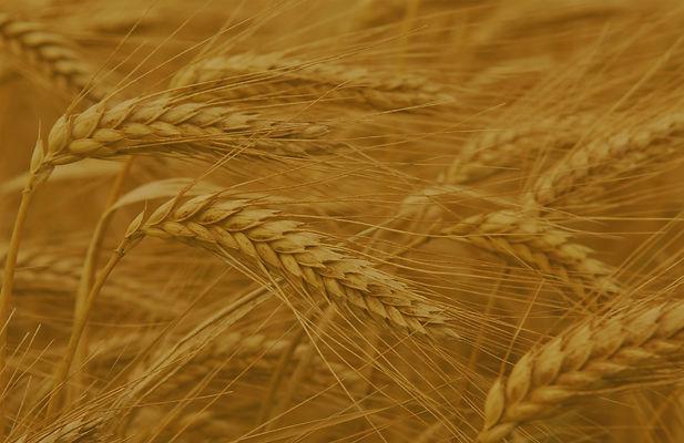 Small Grains.jpg
