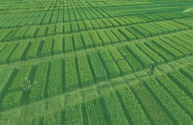 Special Crops.jpg