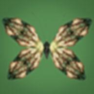 butterfly pandoras box
