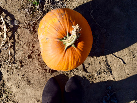 Fall Feels & Pumpkin Patchin'