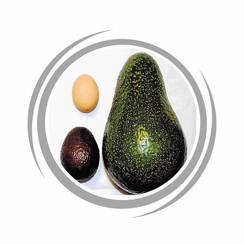 Choquette - Giant Avocado