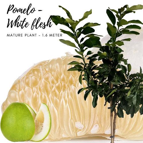 Pomelo White