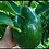Thumbnail: Choquette - Giant Avocado