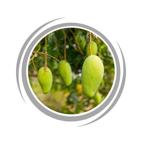 Kensington Pride Mango trees delivered Perth